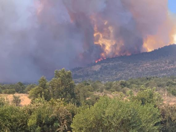 More than 4,000 acres – home to elephants and lions – have been scorched in 36 hours