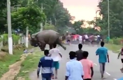 The moment the man was trampled to death by one of the enraged elephants