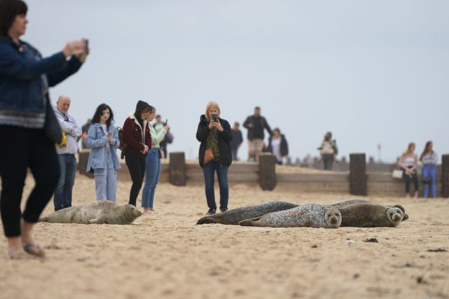 People surrounded the seals for pictures