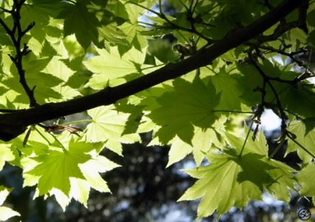 Sunlight through leaves