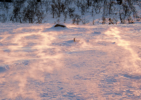 Windblown snow in the dawn sun