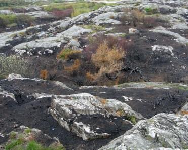 Burned landscape 2