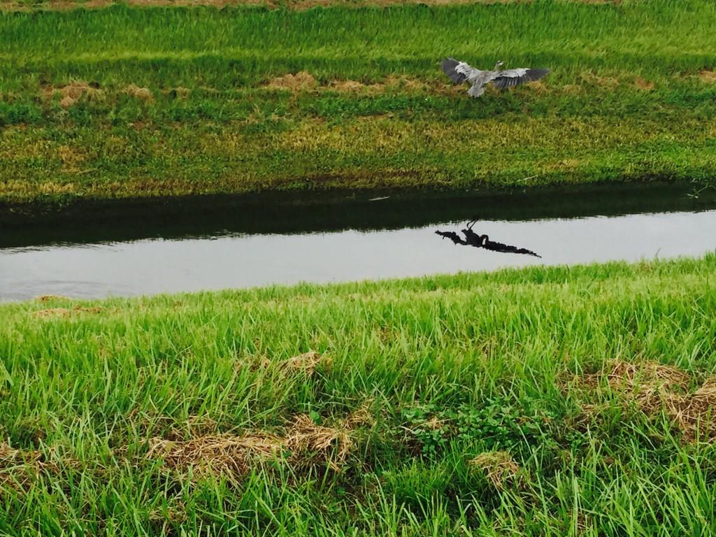 Sarasota Parks Celery Fields