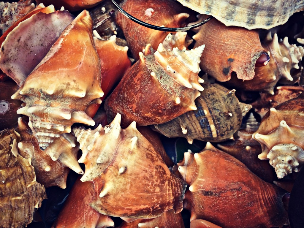 Shells at a market in Bocas del Toro, Panama