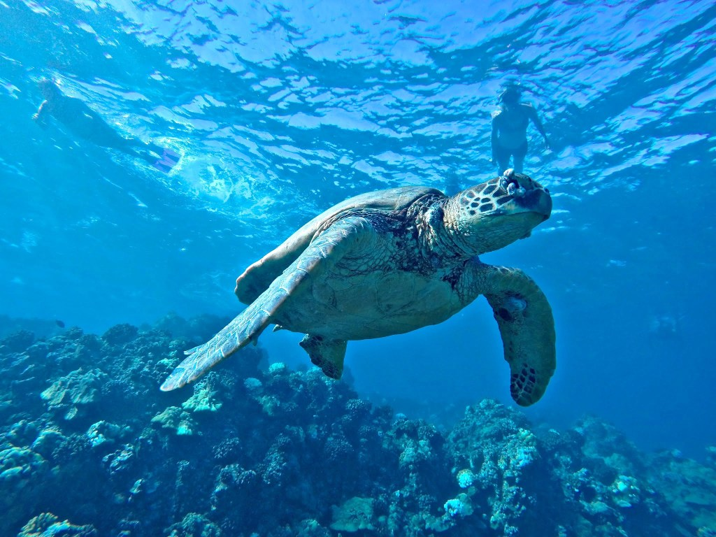 Travel Photos with GoPro, Snorkeling with sea turtles in Maui