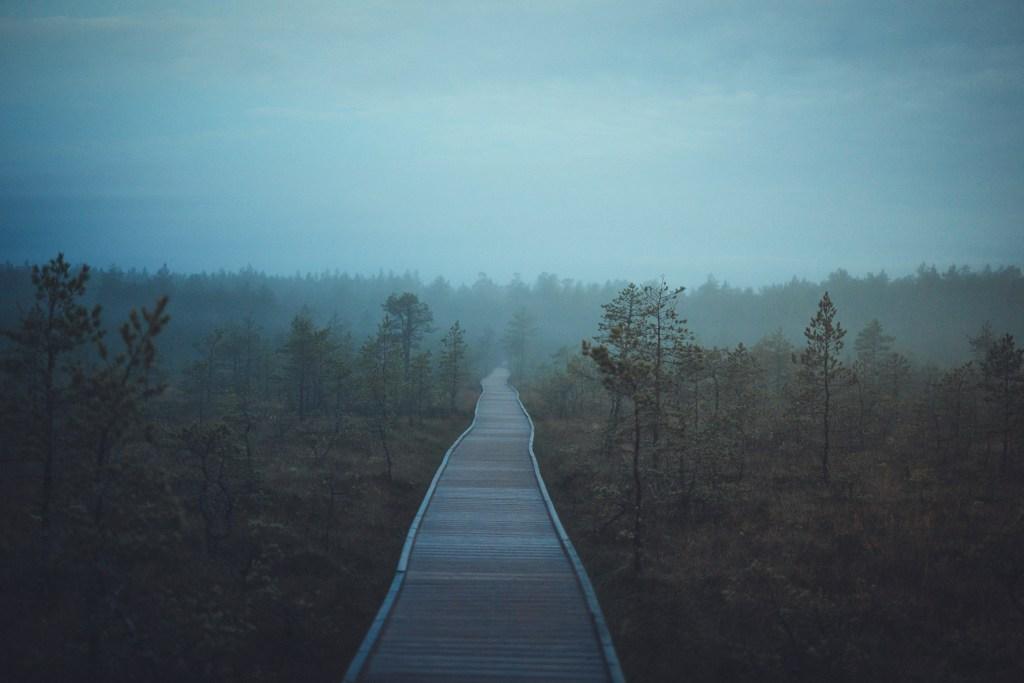 Viru Bog, Estonia
