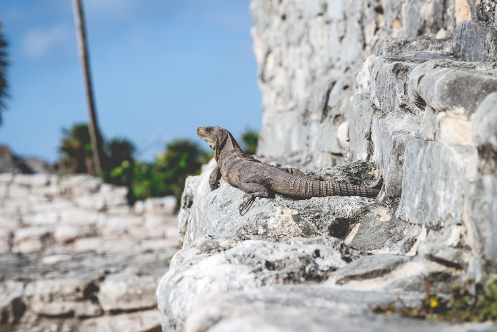 Best Time Of Year To Travel To Tulum Mexico