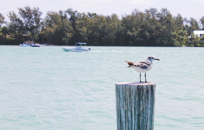 sarasota-bay-paddle-boarding-kayaking-things-to-do-longboat-key-florida