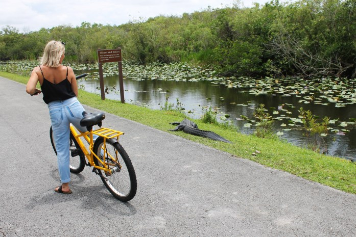 everglades national park alligators bike tour florida road trip