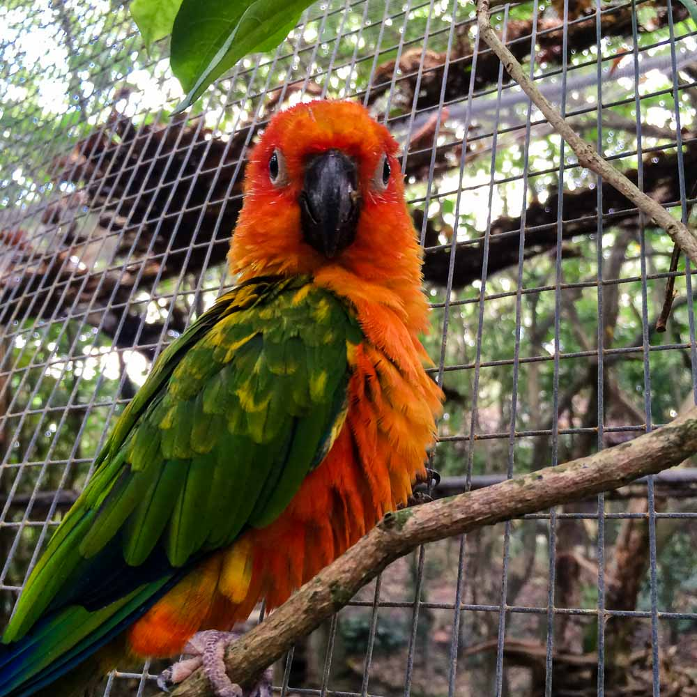 Colourful Parrot in the Aviary