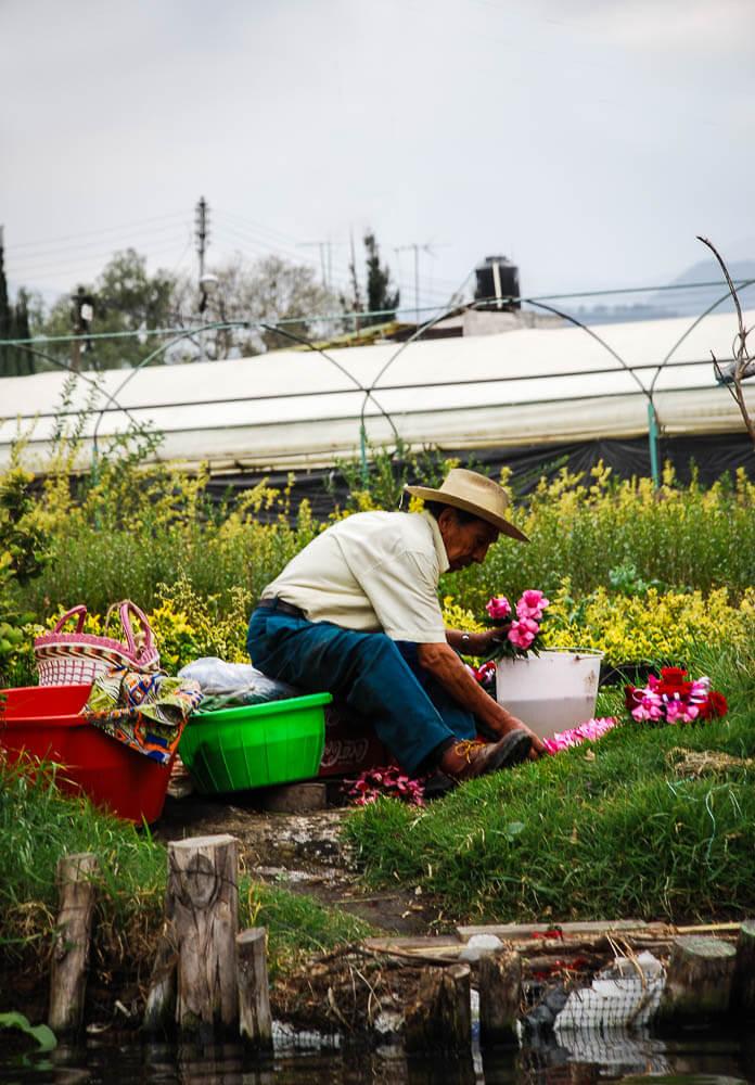 Man gardening flowers.