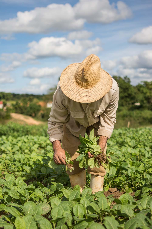 Tobacco Farmer in Viñales Cuba