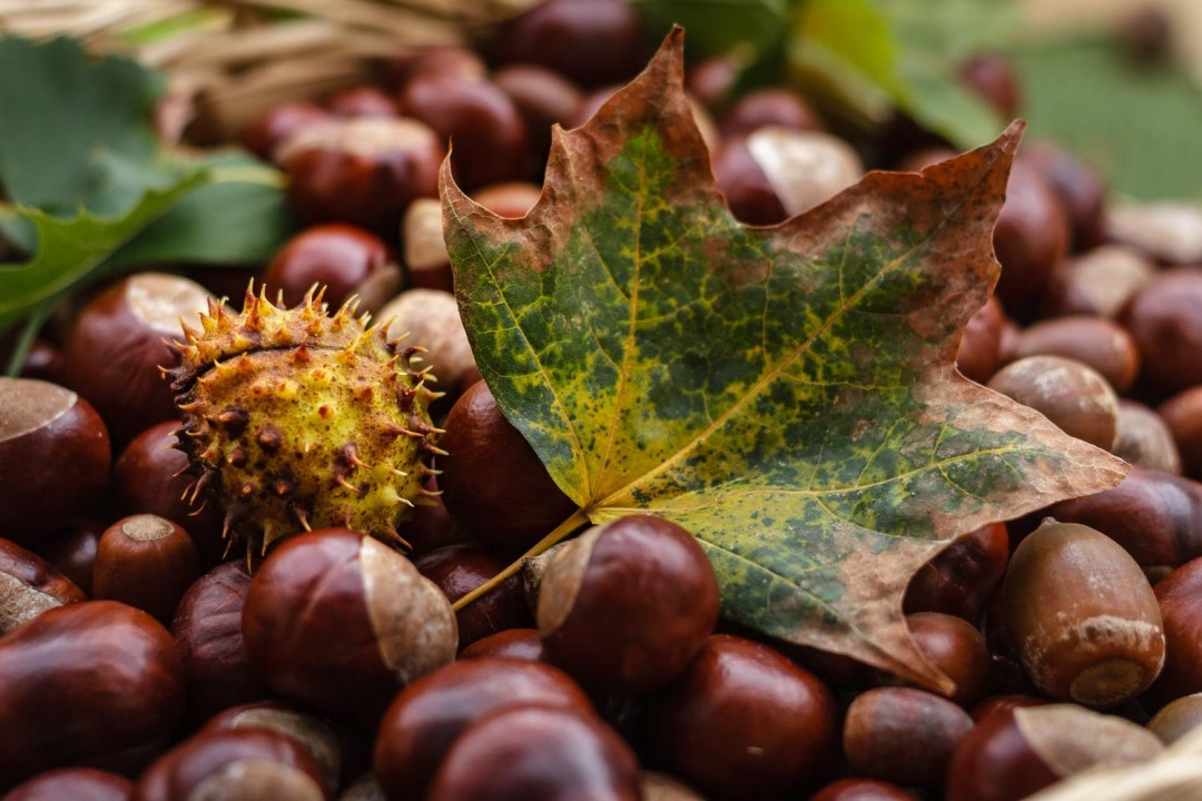 Autumn Festivals in Switzerland Chestnuts