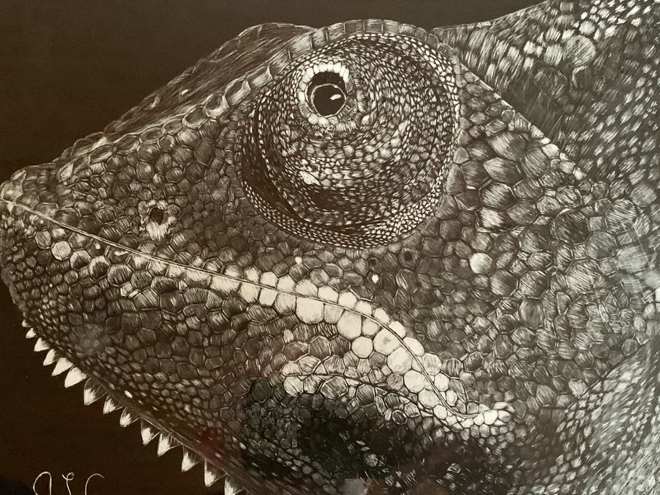 Veiled Chameleon Scratchboard Under Glass