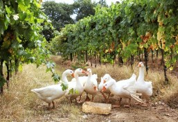 The Science Vs the Fiction Behind Biodynamic Wines - A Talk with Author Monty Waldin 2