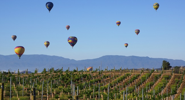 California Wines Now - The Region Thrives with the Resilience of a Phoenix