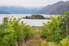 Central Otago Pinot Noir, a Region with the Potential to Equal Burgundy