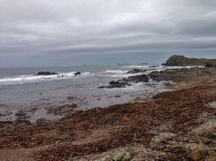 mcgrorys-scenery