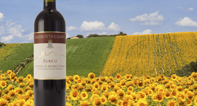 Rubico Lacrima Di Morro D'Alba 2015 - Wine of the Week from O'Briens