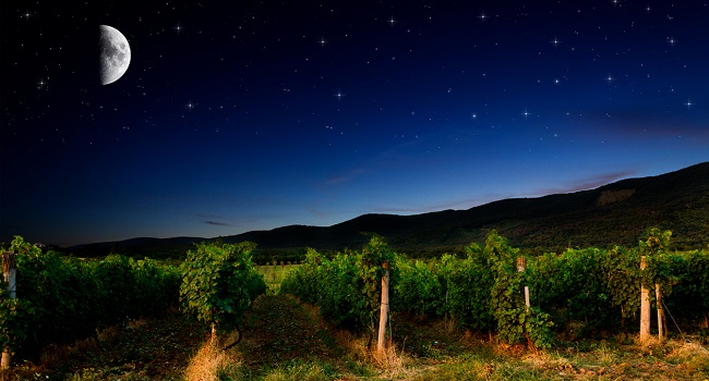 Biodynamics Wizardry in the Languedoc