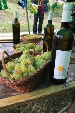 sierre wine trail 2