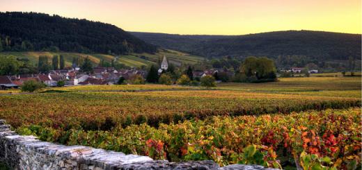 burgundy new aoc