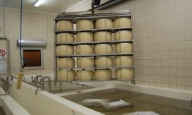 Parmesan cheese factory5