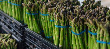 Asparagus: Does Size Matter?