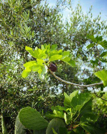 A Natural Puglian Spa Treatment