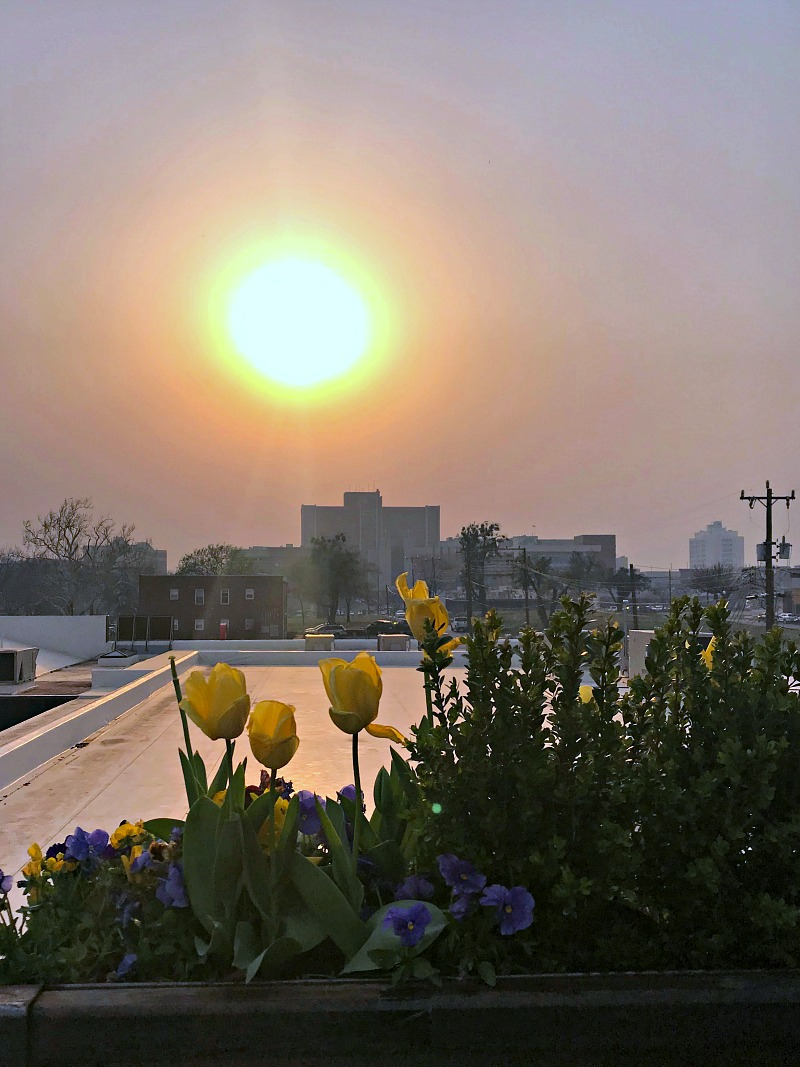 sunset view from The Hall's rooftop