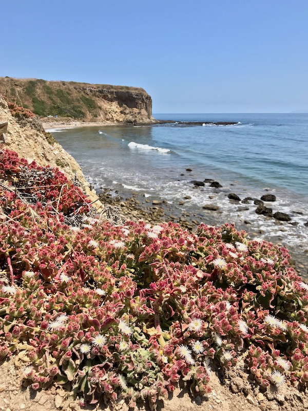 hiking abalone cove