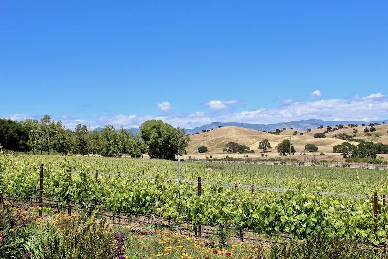 Rusack Vineyards view