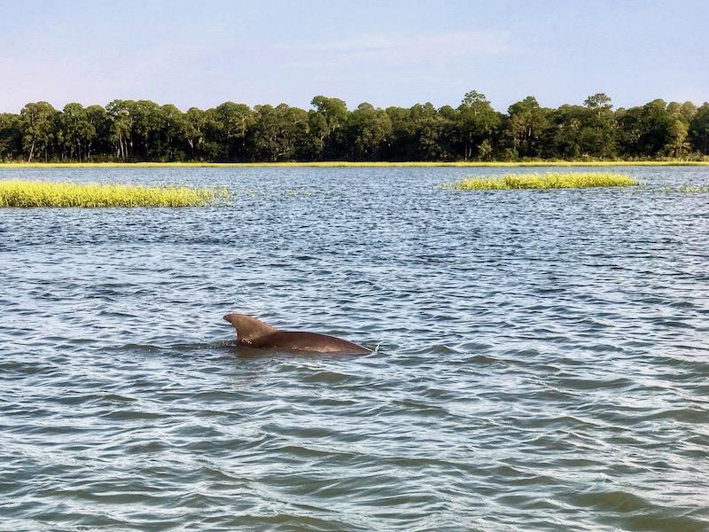 Dolphin eco-tour Charleston Outdoor Adventures