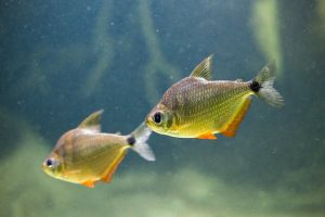 A picture of two fish