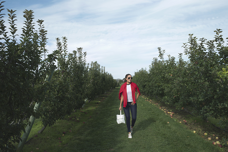 Milk Pail apple picking in the Hamptons
