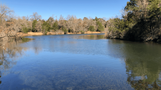 LCRA Park: Lake Bastrop South Shore Park