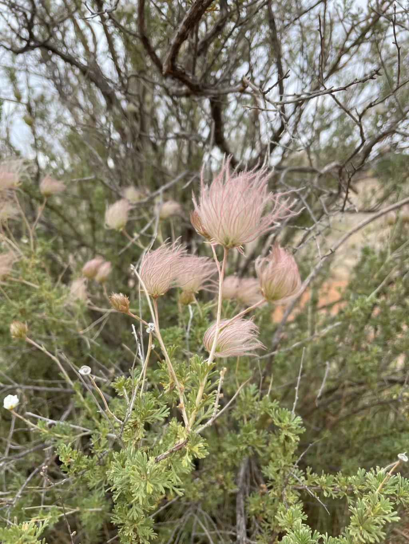 Chihuahuan Desert Nature Center & Botanical Garden