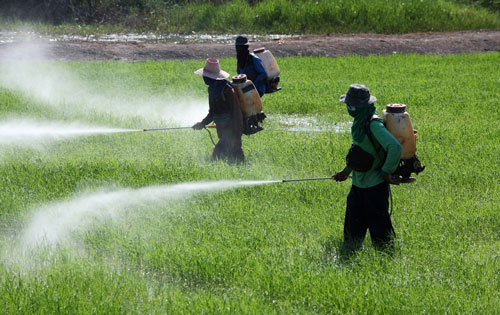 pesticides thailand