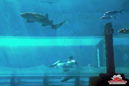 dubai underwater hotel slide path decorations pictures full path