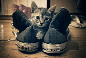 cat and converse blue sneakers