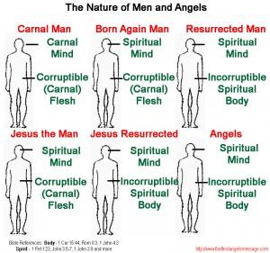 born again incorruptible seed mind spiritual corruptible flesh chart nature angels men Jesus
