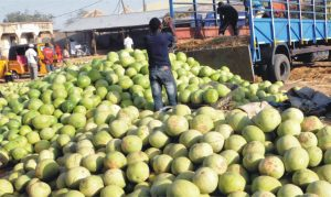 People off-loading watermelon at Muda Lawal Market in Bauchi yesterday.