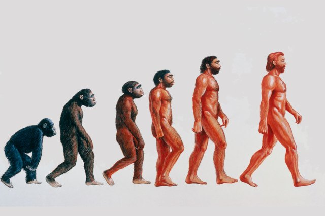 Image result for the ascent of man