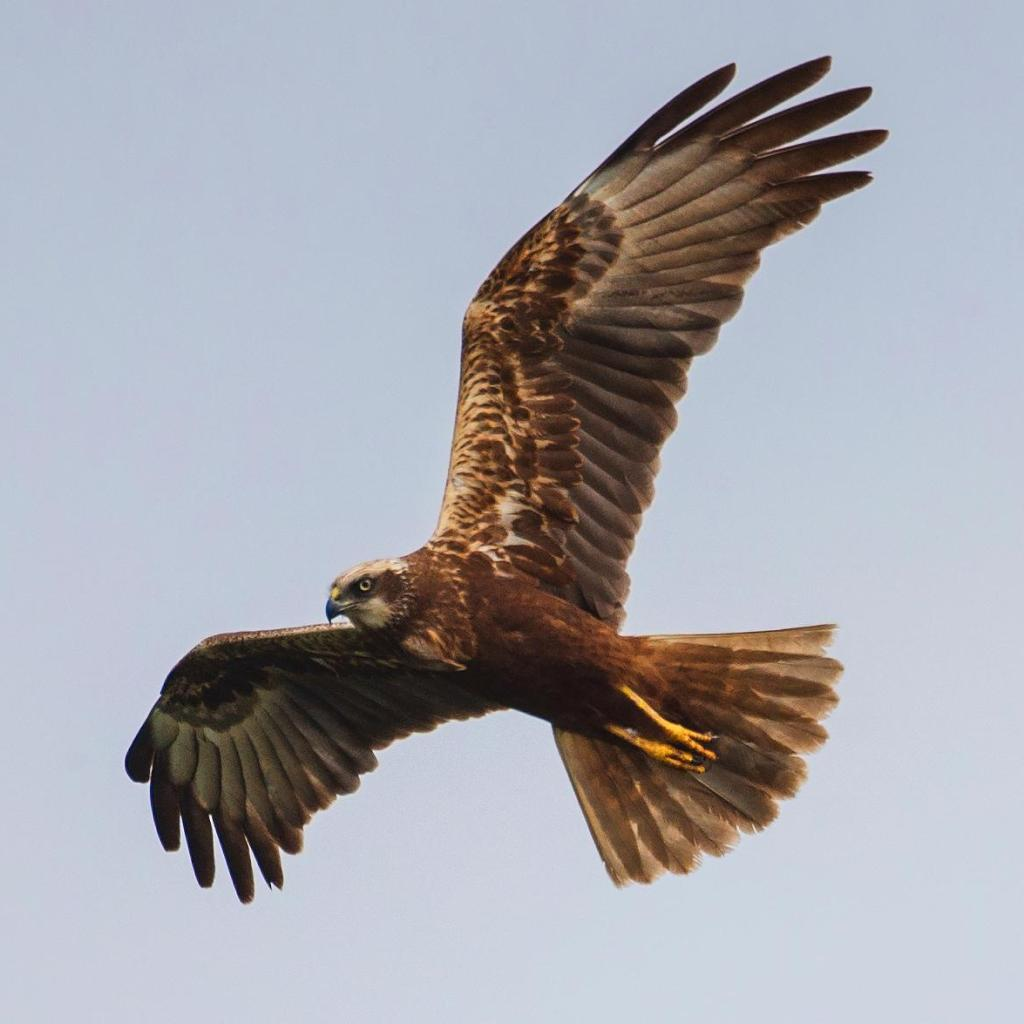 Police tell RSPB to back off