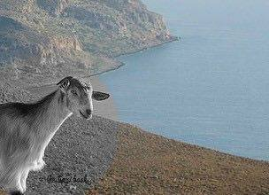 Crete on the road: A stop in Agios Nikolaos - Careful! You might find hair-pin turns on the roads, but goats too.