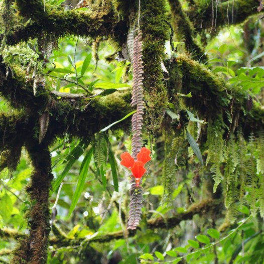 A hanging flower during the hike