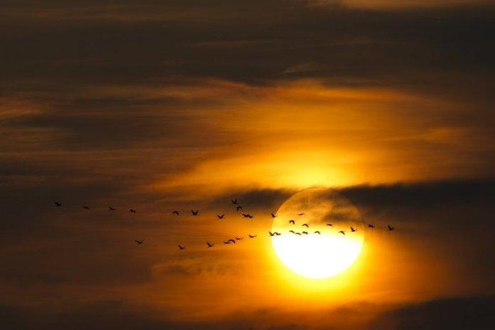 Αποδημητικά πουλιά ψάχνουν καταφύγιο λίγο πριν τη δύση του ήλιου