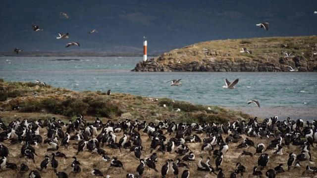 Penguin Colony, Ushuaia