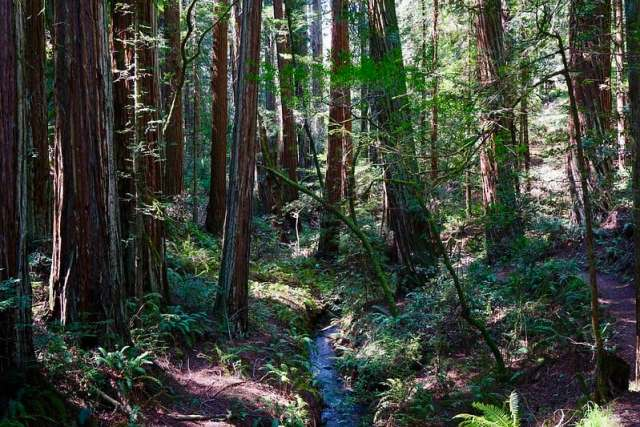 Mt. Tam's Pantoll Park - best camping in northern california