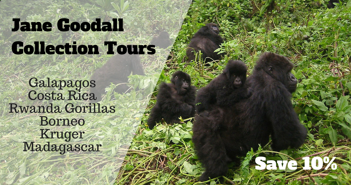 Jane Goodall Gorillas tours